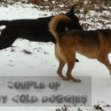 Dallas has been frozen for days – our dogs seem to like it